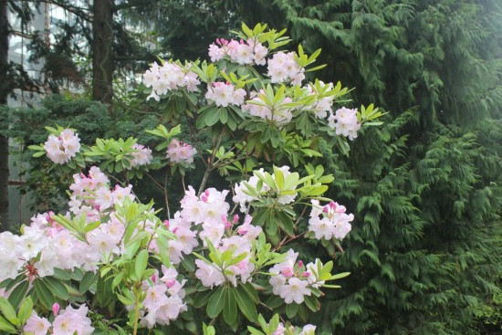 botanichnuij_sad_lviv_2016_05_22 250-023