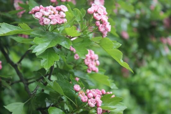 botanichnuij_sad_lviv_2016_05_22 255-028
