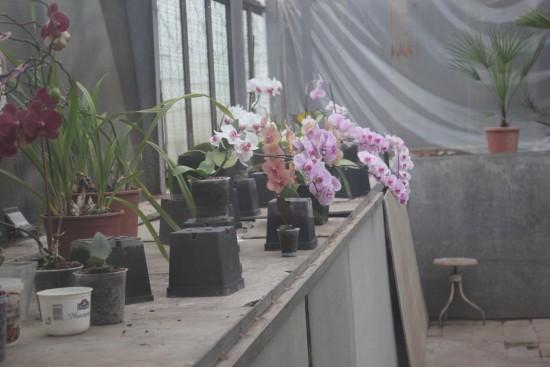botanichnuij_sad_lviv_2016_05_22 262-035